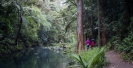 Hatea River below Whangarei Falls