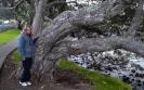 Wyn & Pohutukawa Tree